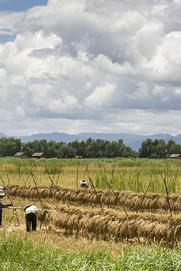 亚洲最穷的国家之一 农村生活一贫如洗 住的是茅草房